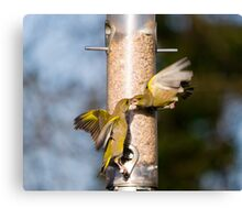 Greenfinch Fight Canvas Print