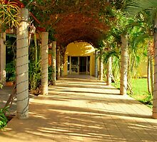 tropical walk way by Tracey Hampton