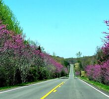 A Drive thru the REDBUDS in Spring!! by Ruth Lambert