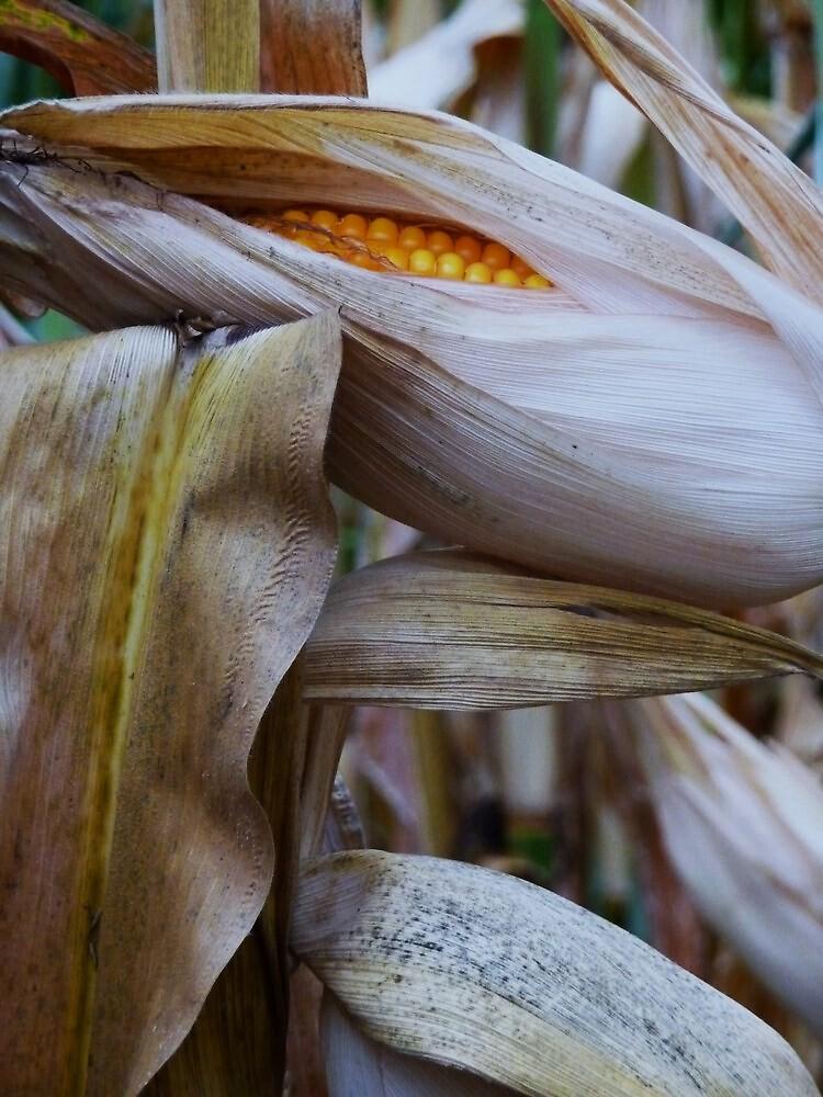 Harvest by Diana Forgione