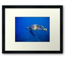 Turtle in the Blue Framed Print