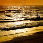 Golden evening by Karen  Betts