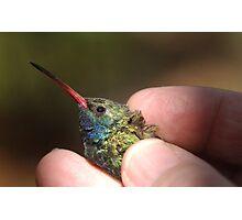 Broad-billed Hummingbird at Madera Canyon Photographic Print