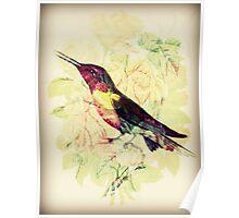 Charming Bird - Digital Art Print  Poster