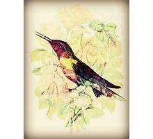 Charming Bird - Digital Art Print  Photographic Print