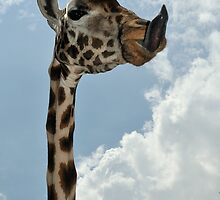Stick out that tongue by Paulo van Breugel