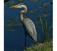 I Shot this Heron with a Canon.. LOL Photographic Print