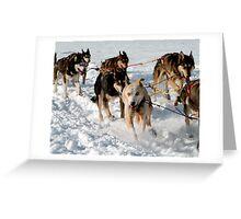 Wrong Way Sled Dog Greeting Card