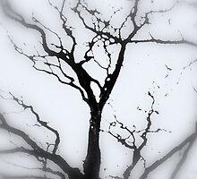 Cracked Sky by Stan Owen
