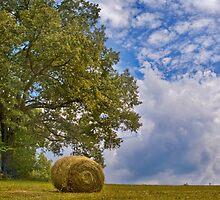 Baling Hay-1 by Nicole  McKinney