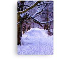 A Woodland Walk Canvas Print
