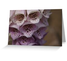 Waiting for Monica - Pale Pink Greeting Card
