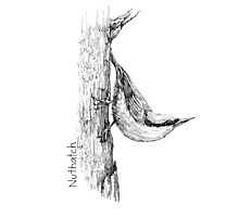 Nuthatch Ink Photographic Print