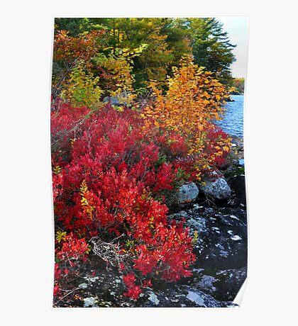 Highbush Blueberry, Lake Muskoka Poster