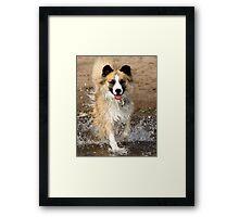 "A ""Secondhand"" Dog~A Joyous Life Framed Print"