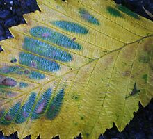 Fallen Leaf in Blue and Green by Laurel Talabere