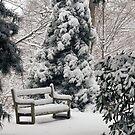 Enjoying Winter's Beauty by Monica M. Scanlan