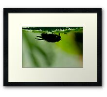 silhouette of a fly Framed Print