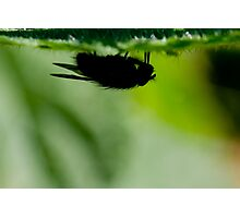 silhouette of a fly Photographic Print