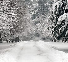 Journey Through the Seasons by Monica M. Scanlan