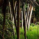 Kentia Palms by Bill  Russo