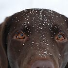 Snow Dog by Corkle