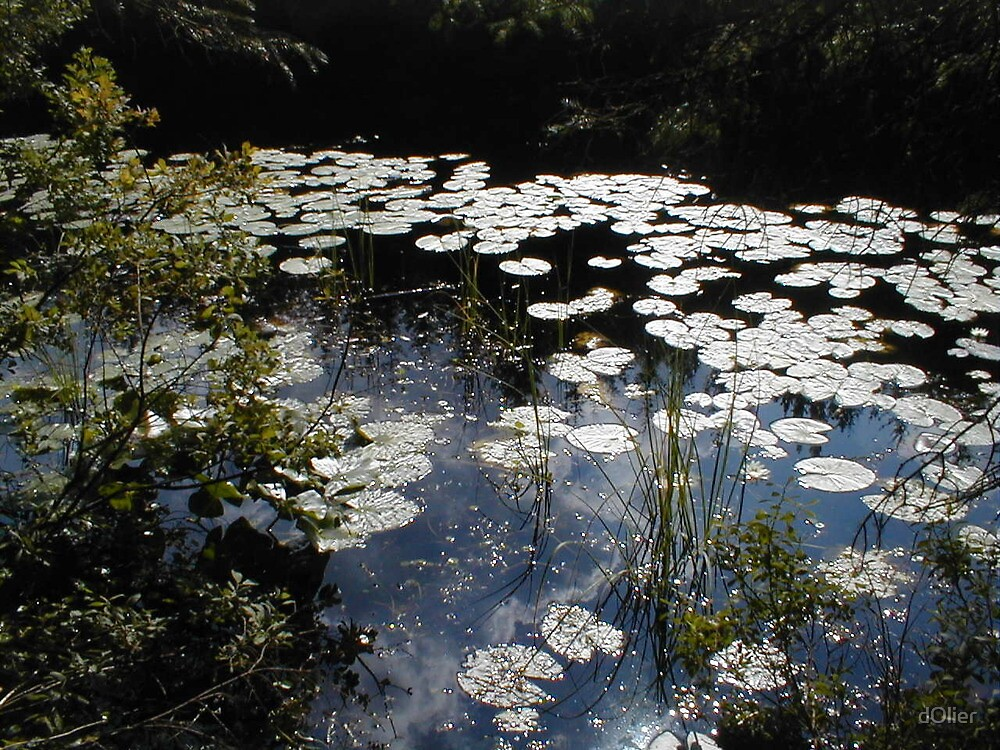 Lilies - Donegal by dOlier
