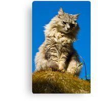 Perched Cat - Capri,Italy Canvas Print
