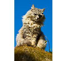 Perched Cat - Capri,Italy Photographic Print