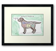 Anatomy of a Chocolate Lab Framed Print