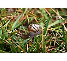 Snail on blade of grass Photographic Print