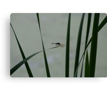 Dragonfly Sihouette Canvas Print
