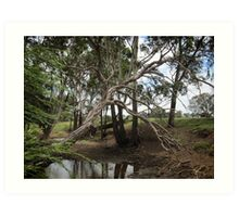 Dry creek bed, Warwick, QLD Art Print