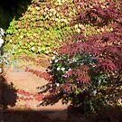 Radcliffe House courtyard by nealbarnett