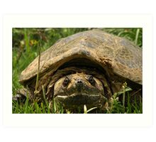 SNAPPING TURTLE Art Print