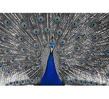 Peacock Majesty Photographic Print