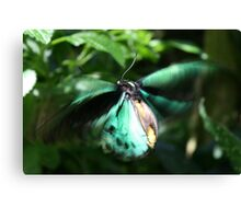 Jade Butterfly Canvas Print