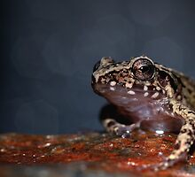 Southern Cricket Frog by Michael L Dye