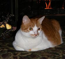Molly Enjoying The Fireplace by Marie Sharp