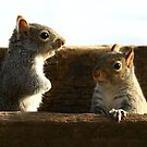 Squirrel Talk by Lori Deiter