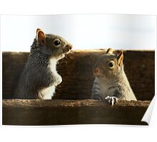 Squirrel Talk Poster