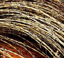 Barbed Wire by Elizabeth  Glazner
