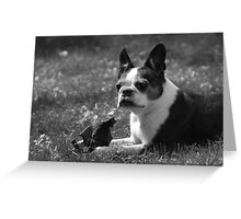 Luci at 9 Greeting Card