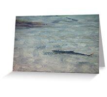 Kingfish at Ned's Beach, Lord Howe Island Greeting Card