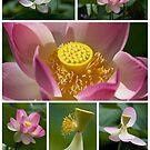 Lotus Positions by Sharon Hammond