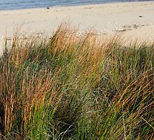 Lord Howe Island Dune Grass by Robert Stephens