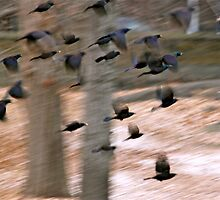 Birds Flying by MPICS