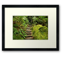 Fern Bower Walk Framed Print
