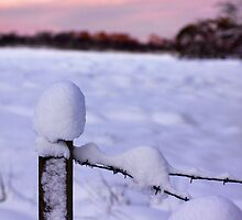Snowy Fence Post by Lynne Morris
