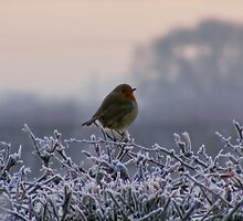 A Cold and Frosty Morning by AnnDixon